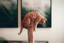 Cats!  / by Amanda Jones