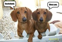 Doxies and Other Adorable Critters / by Concetta Brown