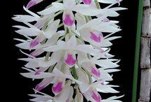 Orchids / by Jasmine Longhurst