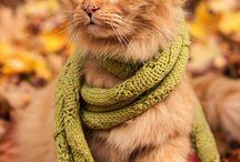 Kitty / by Liz French