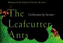 Insects / by SC4 Library