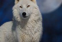 animales / by liliana zimmler