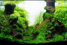 aquascape / by jill Nelson