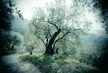 My Photos / Giocando un pò con la Sony Nex 5N e Camerabag 2 o Snapseed / by Stefano
