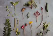 flowers / by Christine Hærra
