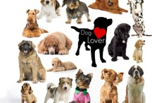 Pets and loving them! / by Lori Henry