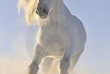 horses / by Niki Ruetz