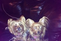 My Furbabies / by Cindy Cobb