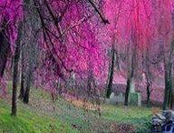 Sweet Spring / by Denise Crawford