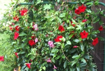 gardening / by Diane Bacon