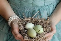BIRDS-and-EGGS / by Jeanne Stregles