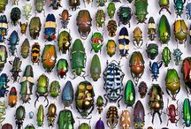 Insects / by Kentaro Takahashi