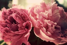 Flowers / by Apple Peterson