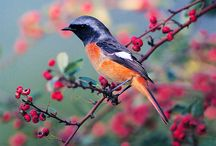 Birds / Bird houses / by Betty T