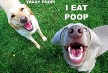 Makes me laugh / by Christy Hamilton