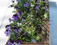 "MJ's garden / by ""Granny"" Engle"