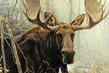 Marvelous Moose / by Nicole
