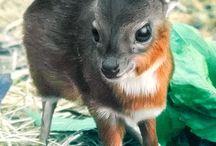 Animal - Cute Baby / by Veren Evania