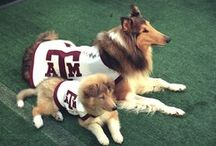 Texas A&M / by Linda Fredrickson Landreth