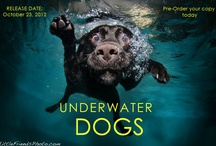 Underwater dogs / by Mr. Dad
