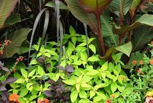 Plants / by Tulipa Grey