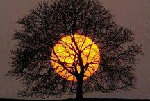 Moon shots / by Helen Thomas