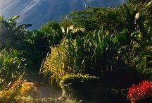 Costa Rica trip 2013 / by Annie Hunter