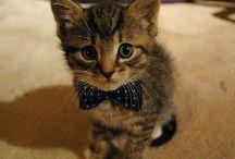 Pets / by Pinterest Brasil