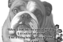 English bulldogs / by Martin Sarvis