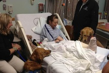 Service Dogs / by Charlene Ricketts