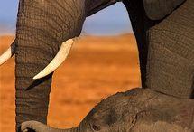 Cute animals / Cute animals / by Donna Weller