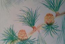 Classe 5 : Botanique / by MAMANcigogne