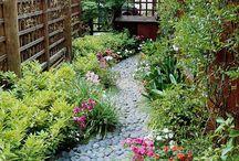 Backyard / by Ron Ballecer