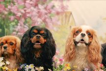 Cavalier King Charles Spaniels / by Becca Remmey