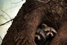 animal pics / by Suzanne Edmondson