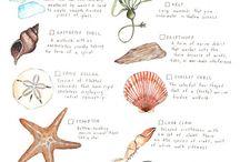 Nature & animals / by Karen Bobbins