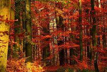 Fall / by Austin Blackman