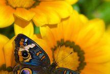 Butterflies~Dragonflies~Ladybugs / by Cheryl Silva Burrhus