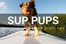 SUP Pups / If you love dogs like we do... you'll love this board. :) #dogs #puppies #puppy #SUPpups #SUPdogs / by Tower Paddle Boards