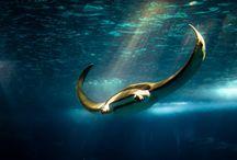 SEA LIFE / Some stunning Sea Life / by Claude Benard - HoteliTour