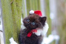 Cute / by Leann Boyce