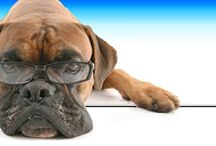 The Top 4 Signs Your Pet Dog is Going Through Stress / by VetShopMax.Com