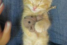 Kitten Bonanza!! / by paige =^..^=