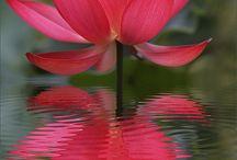 Flowers / by Nickie Huddleston Turner