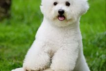 Breeds Of Dogs With Pictures / Breeds Of Dogs With Pictures – All Specific Types Of Dogs with The BEST Pictures via the gallery link on the associated specific Dogs Breeds Info page. I have compiled many of the Best Types Of Dogs With Pictures  Breeds available.  The Dog Breed Info given will give short but correct info on each Dogs Breeds overall characteristics. - See more at: http://www.all-greatquotes.com/allaboutpets/#sthash.kMoVvBiu.dpuf / by tonikane
