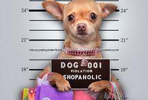 Love Chihuahuas!!! / by Connie Shinker