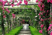 Gardening / by Lisa Cheatham