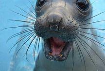 Cute & Amazing Animals! / animals / by Lynn Hier