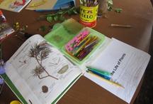 Plants Unit Study / by The Curvy Vegan