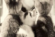 Cats / by Angela Verhoeven